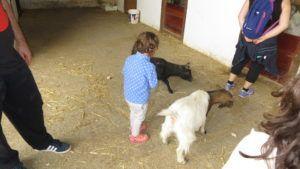 Visita a una granja - O. dando de comer a las cabras